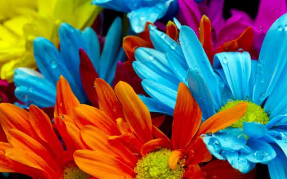 цветы, яркие, воды, красочные, капли, оранжевый,