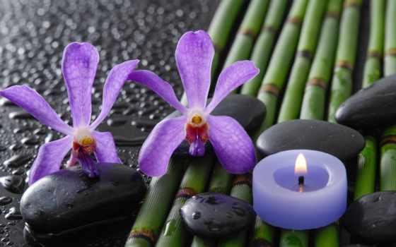 чая, why, бергамотом, огарок, свечи, нов, помолчим, тишине, интим,