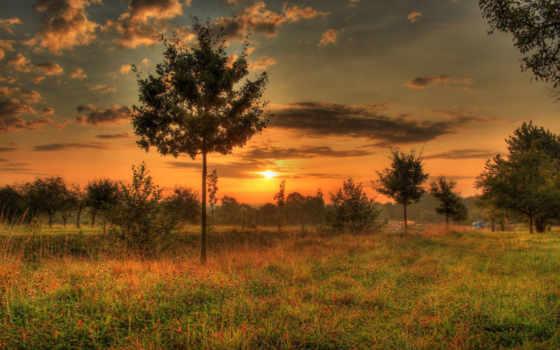 hungen, фото, природа, und, деревья, desktop, трава, истинном, trees,