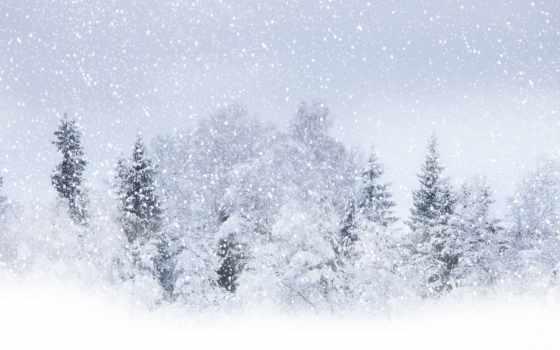 снег, winter, красавица, trees, буря, лес, часов,