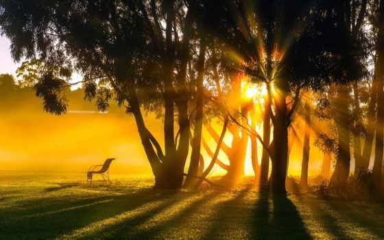 природа, свет, leto, trees, утро, rays, вечер, landscape,