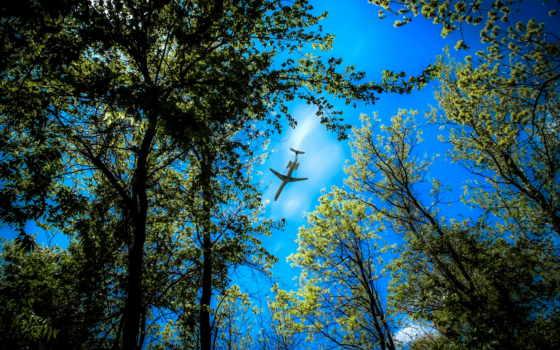 небо, trees, верхушки, самолёт, самолеты, природа, лес, закат,