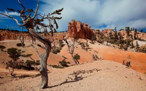 каньон, grand, пустыня, компьютер, шпалери, растительность, нояб, видов, горы,