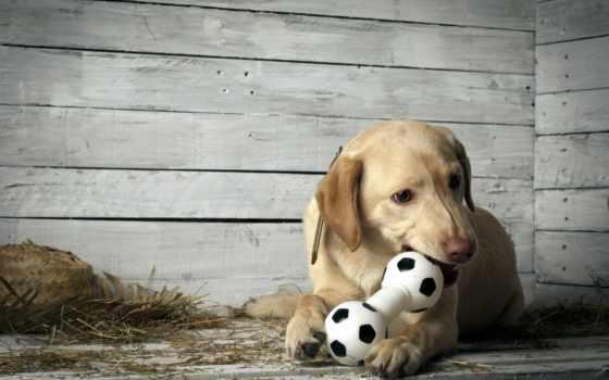 собака, pinterest, моя