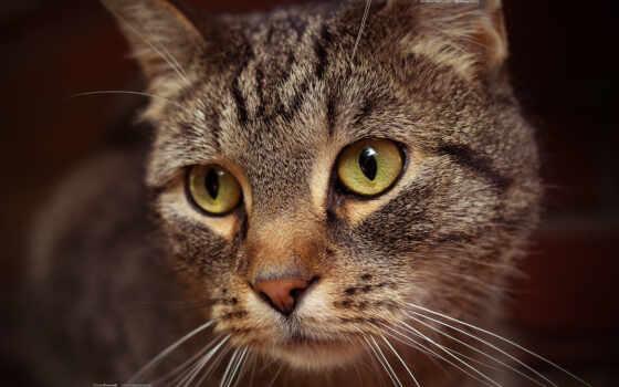 row, кот, sit, когда, even, котенок, you, букет