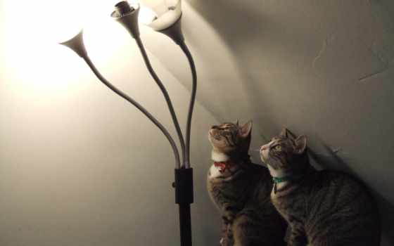 разноцветные, кошки, ошейники, светильник, горит, лампы, люстры,