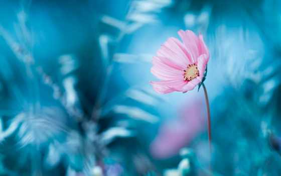 цветы, обоях, ago