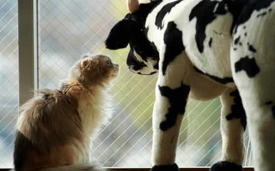 cow, кот, окно