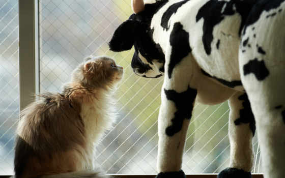 cow, кот, окно, toy, картинка,