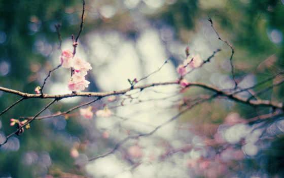 bokeh, весна, ветки