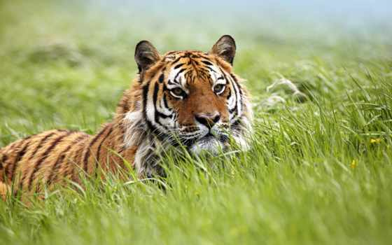 zhivotnye, животных, африки Фон № 125288 разрешение 1920x1200