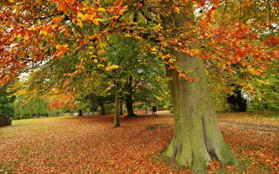 trees, осень, landscape, pictures, природа, пасть, landscaping, pin,