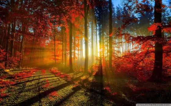 desktop, осень, jesus, картинка, изображение,