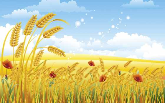 пшеницы, колосья, fone, векторе, пшеница, клипарт, маки, неба,