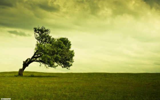 дерево, wallpaper