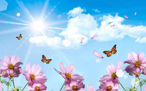 цветы, небо, бабочки