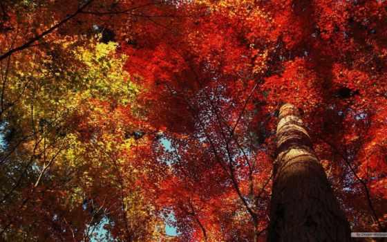 осень, leaf, листья, природа, пасть, trees, photography, дерево,