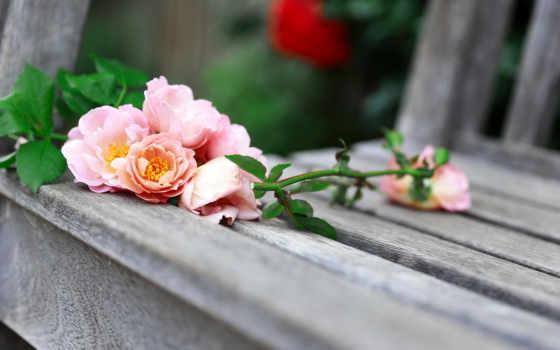 flowers, cvety, природа, розы, розовые, скамейка, дневник, love,