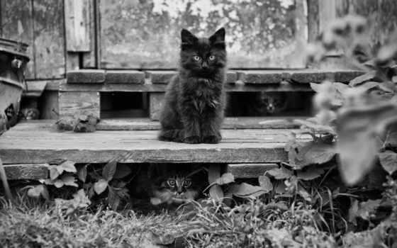 gatos, gatitos, blanco, negro, gato, fondos, imágenes, hierba, kittens, black,