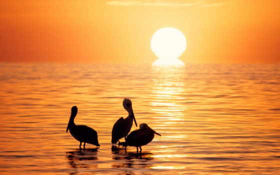природа, птицы, фото, закат, desktop, море, animal, три,