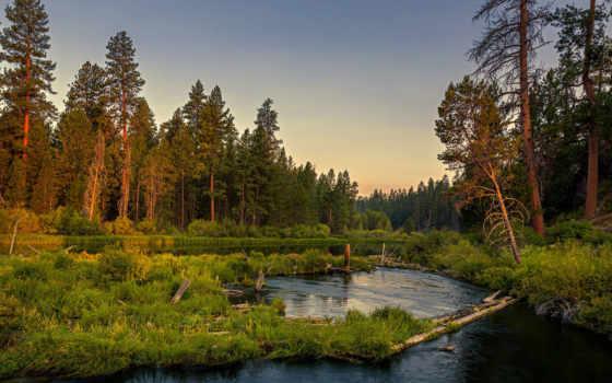 лес, река, спокойствие, природа, wood, трава, хвойный, закат,