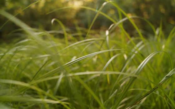 трава,