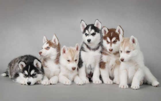 собак, хаски, собаки, собака, клички, кличку,