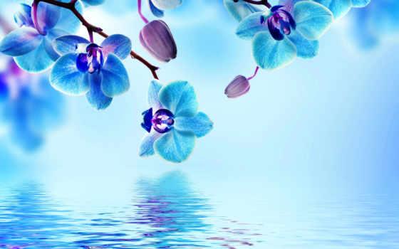 фотообои, орхидеи, купить, голубые, со, синие, водой, flowers, cvety, шторы, интернет,