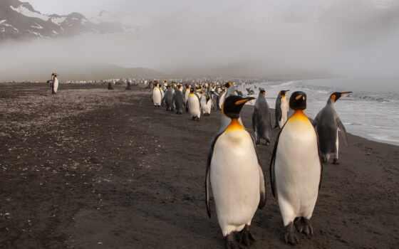 пингвин, море, пляж, pingvin, туман, more, птица, tema, туман, берег, пляж