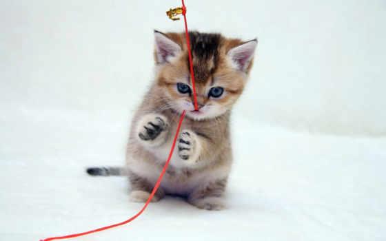 котенок, котик