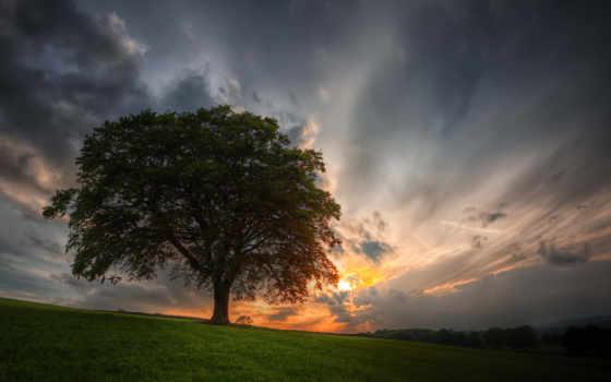 небо, дерево, закат, поле,