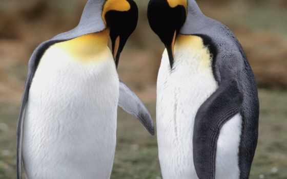 пингвины, vapor, влюбленные