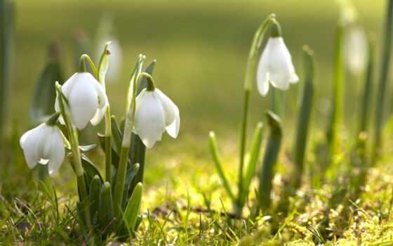 makro, kwiaty, foto, макро, цветы, pin, tapeta, весна, rośliny, pinterest,