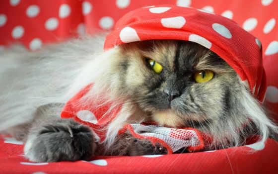 кот, пушистый, платок, морда, loading, ложь, sit,