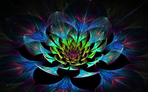 цветы, графика, лепестки, абстракция, lotus, природа, мар, chrysanthemum, cvety,