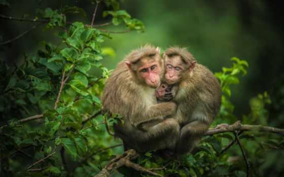 обезьяна, природа, обезьянка, best, loaded, уж