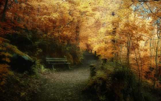 природа, осень, природы