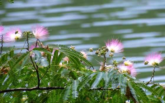 цветы, бусы,