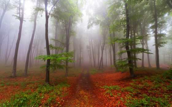 природа, июнь, фотошопа, туман, красивая, лес, размера, волшебные, природы, тропинка, мб,