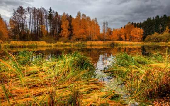 клипарт, осенние, осень, пейзажи -, природа, осенняя, растровый, лес,