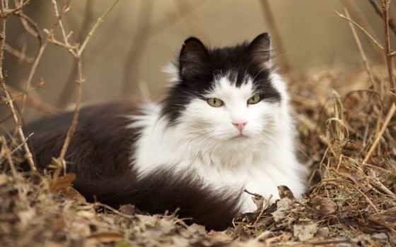 чёрно, кот, white, траве, сидит, пушистый, кошки, окрас,