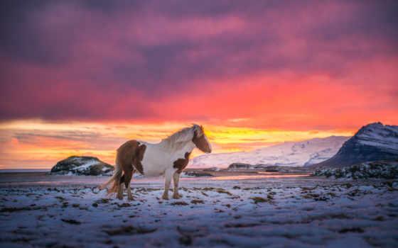 iceland, горы, лошадь, небо, снег, ветер, лошади, краски,