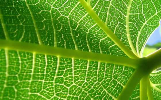телефон, лист, прожилки, листва, телефона, природа, добавить, макро, избранные,