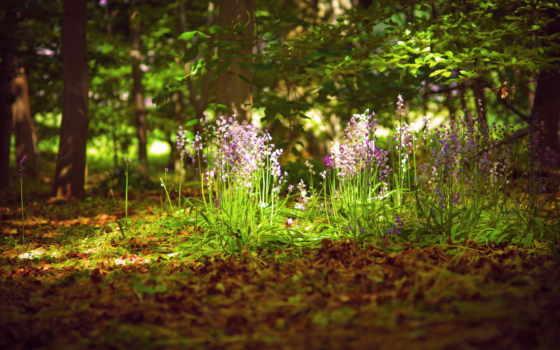 summer, cvety, свет, природа, лес,