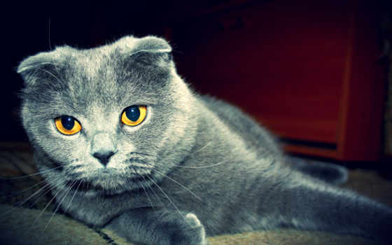 кот, cats, desktop, free, котенок, animals,