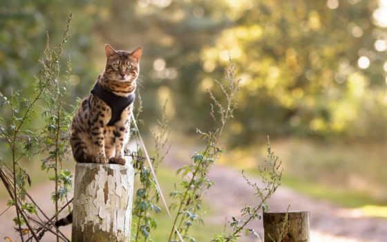 кот, природа, free, cats, фото, pictures, коты,