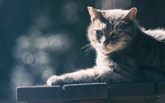 кот, кошки, canvas, стена, коты, art, гармашова,