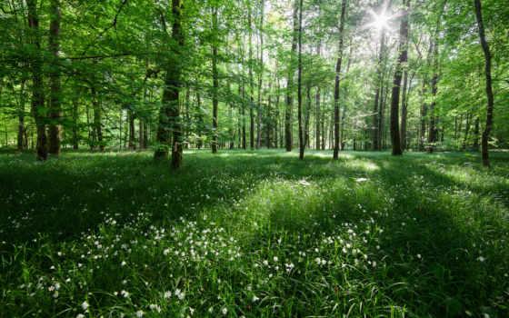 леса, коллекцию, посмотрите, коллекциях, яndex, словно, symbat,