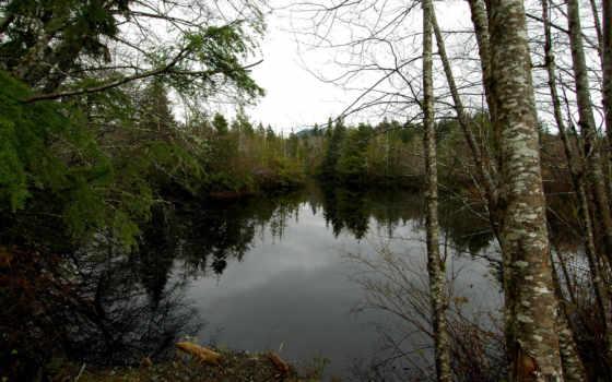 природа, небо, iphone, лес, зелень, река, отражение, мрачно, береза,
