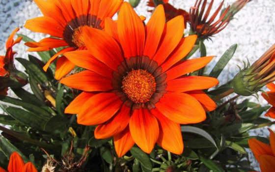 цветы, настроение, флорист,